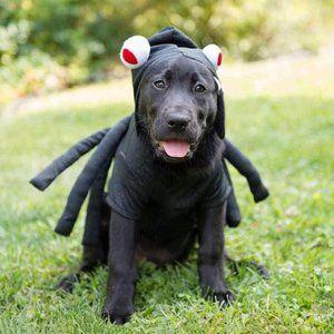 Martha Stewart Dog Halloween Spider Costume - Medium
